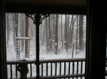 Looking out at bird feeders from cabin