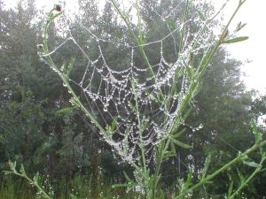 Spider web after rain