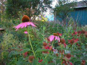Native pollinator plants