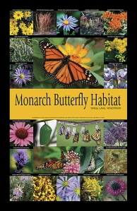 Monarch Butterfly Habitat