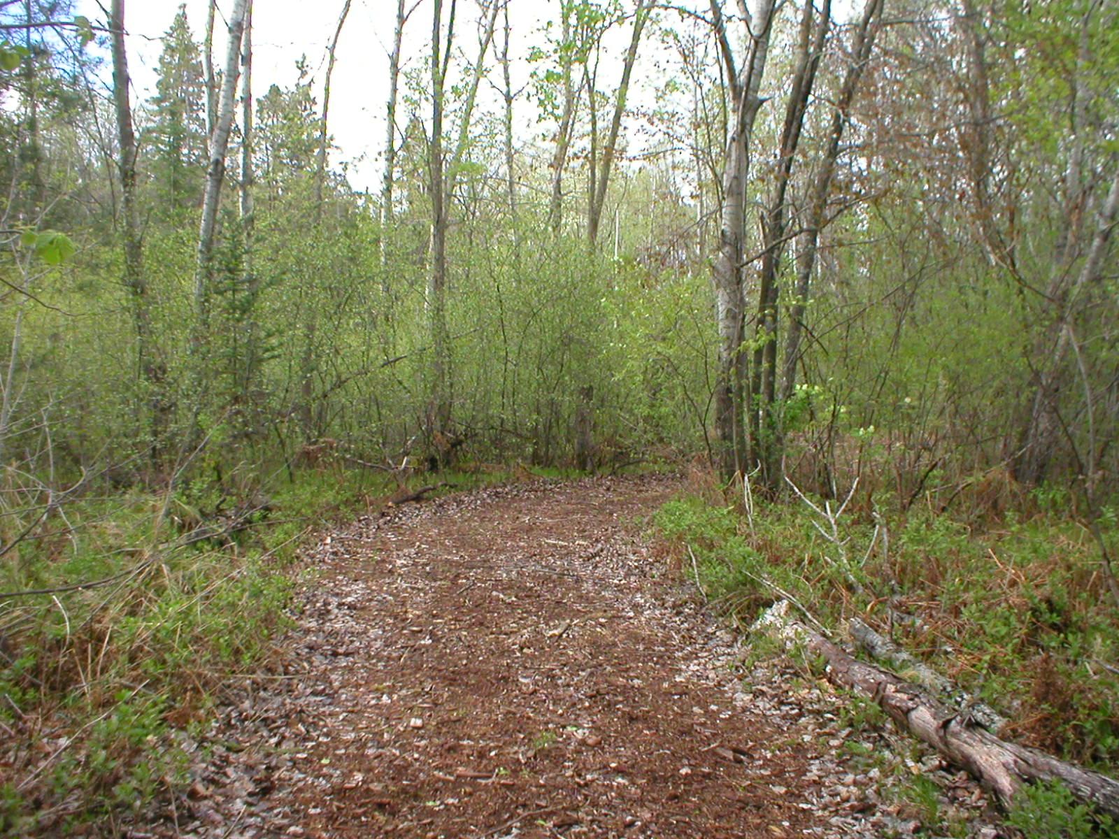 Woodland trail to habitat