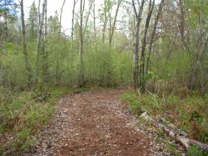 Woodland trail to habitat