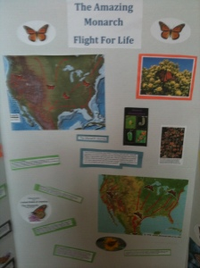 Dakota Robinson's Story Board on Monarch Migrations.