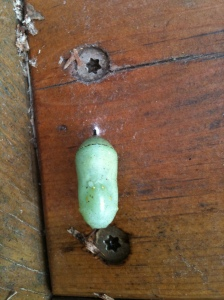 Chrysalis after the storm. On underside of Aldo Leopold bench copyright Mary Ellen Ryall