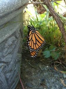 monarch birth 26 August 2012