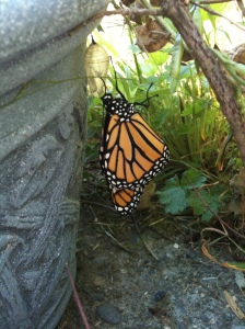 monarch birth 26 August 2012