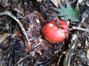 Red mushroom growing in wet forest area