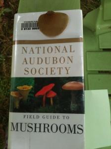 Mystery mushroom
