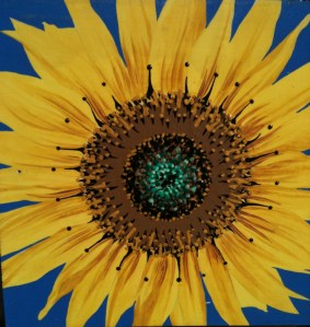 Sunflower art wall Fitchburg