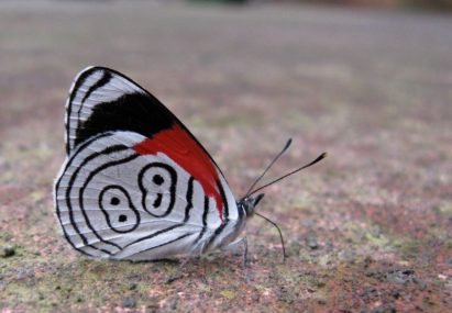Mariposas 88 / The 88 butterfly
